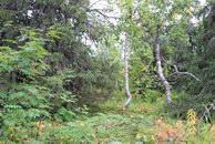 31. Зона леса в районе вершины 870,6