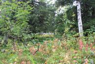 33. Горный лес.