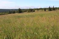 44.На огромных полянах с высокой травой сторожами стоят ели.