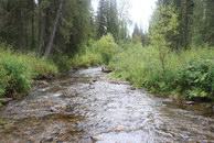 65. Казалось бы – речка вполне пригодна для ходьбы. На самом деле- это один из редких участков где метров 50 не встречаются завалы.